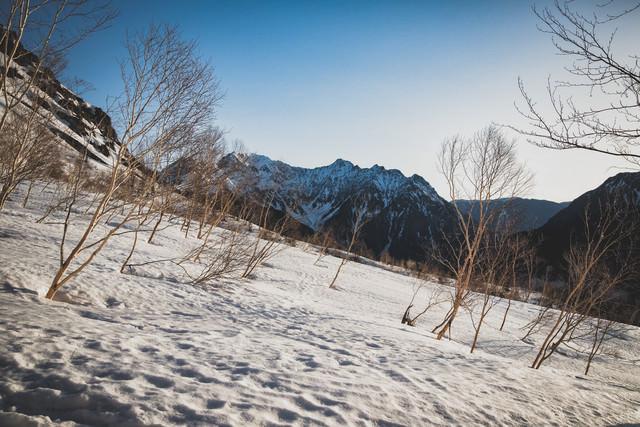 ダケカンバと穂高岳(飛騨山脈)の写真
