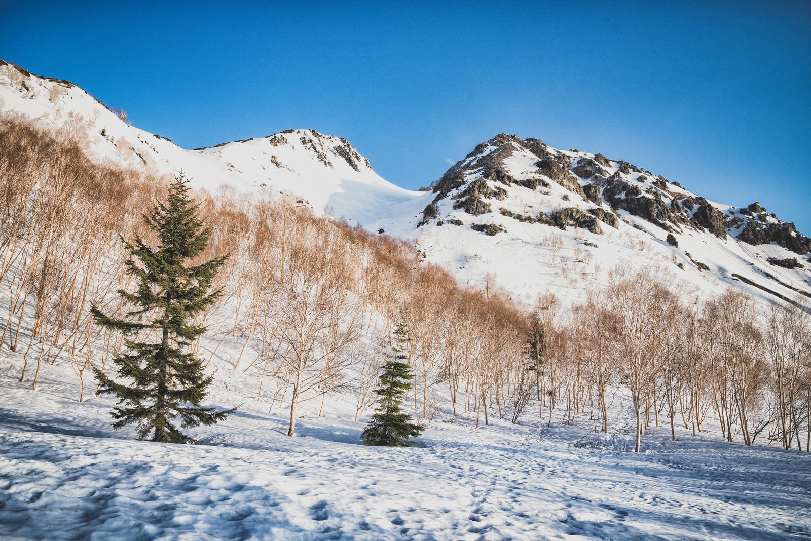 「北アルプスの焼岳(北峰と南峰)」の写真