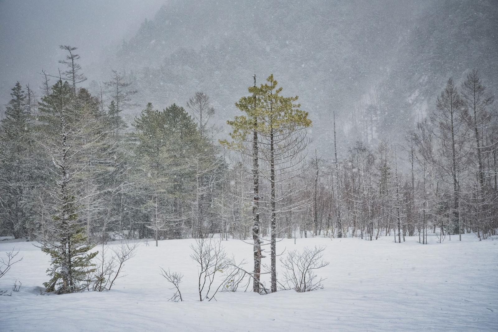 「雪原になる冬の田代湿原」の写真