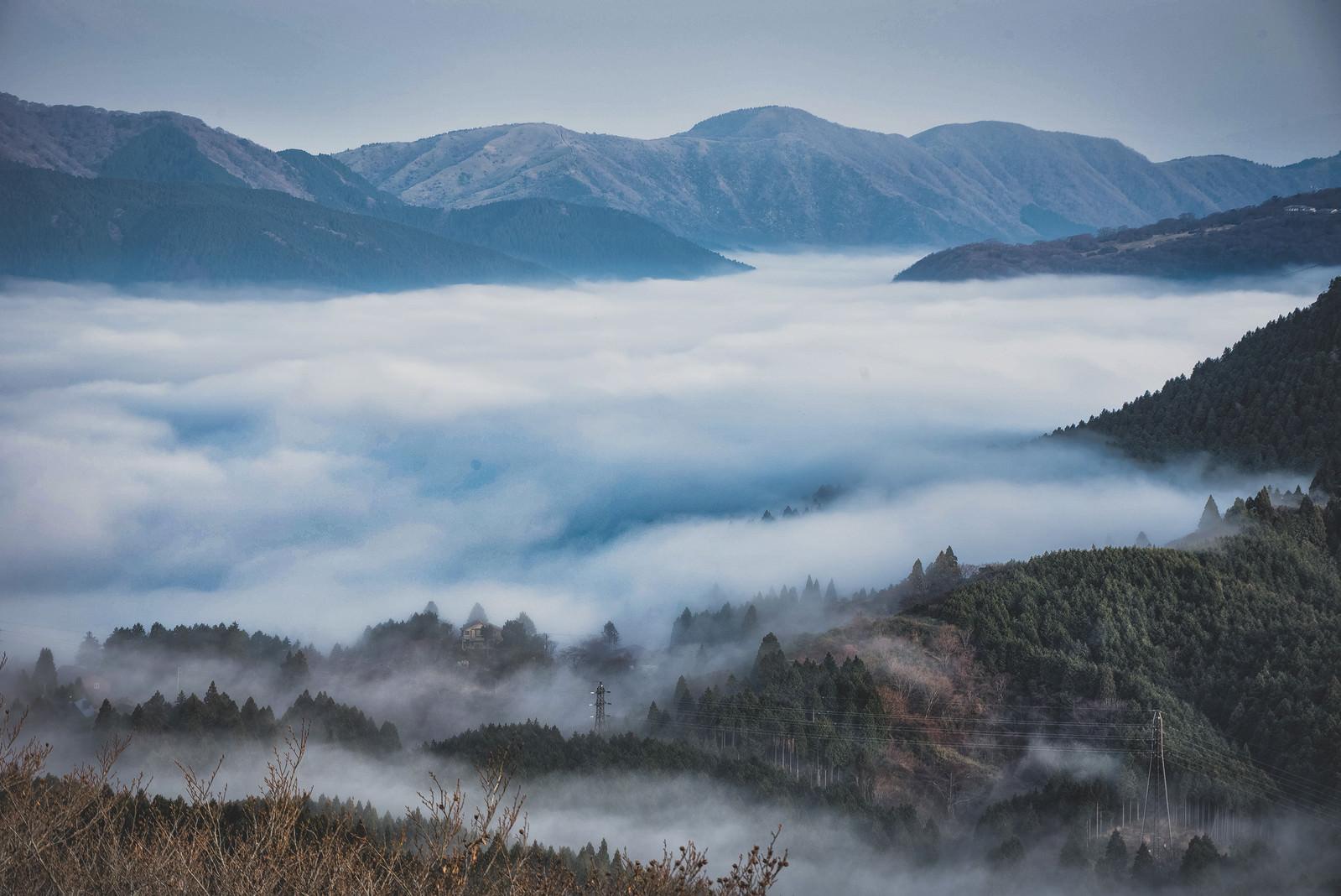 「朝霧が立ち込める幻想的な元箱根の夜明け」の写真