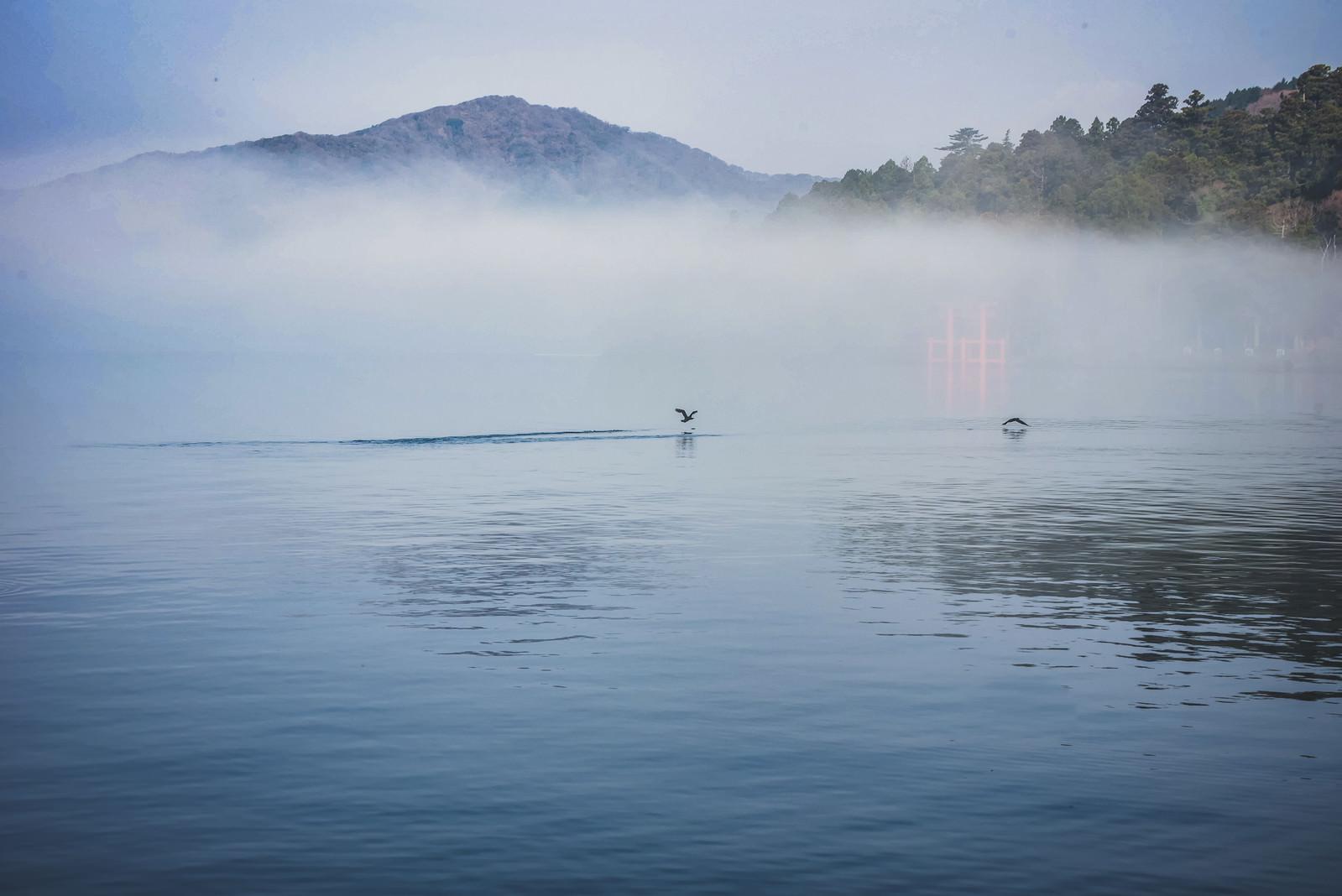 「朝霧の湖面から飛び立つ水鳥」の写真