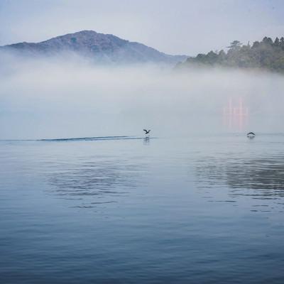 朝霧の湖面から飛び立つ水鳥の写真