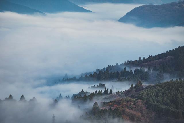 霧に包まれる箱根の森の写真