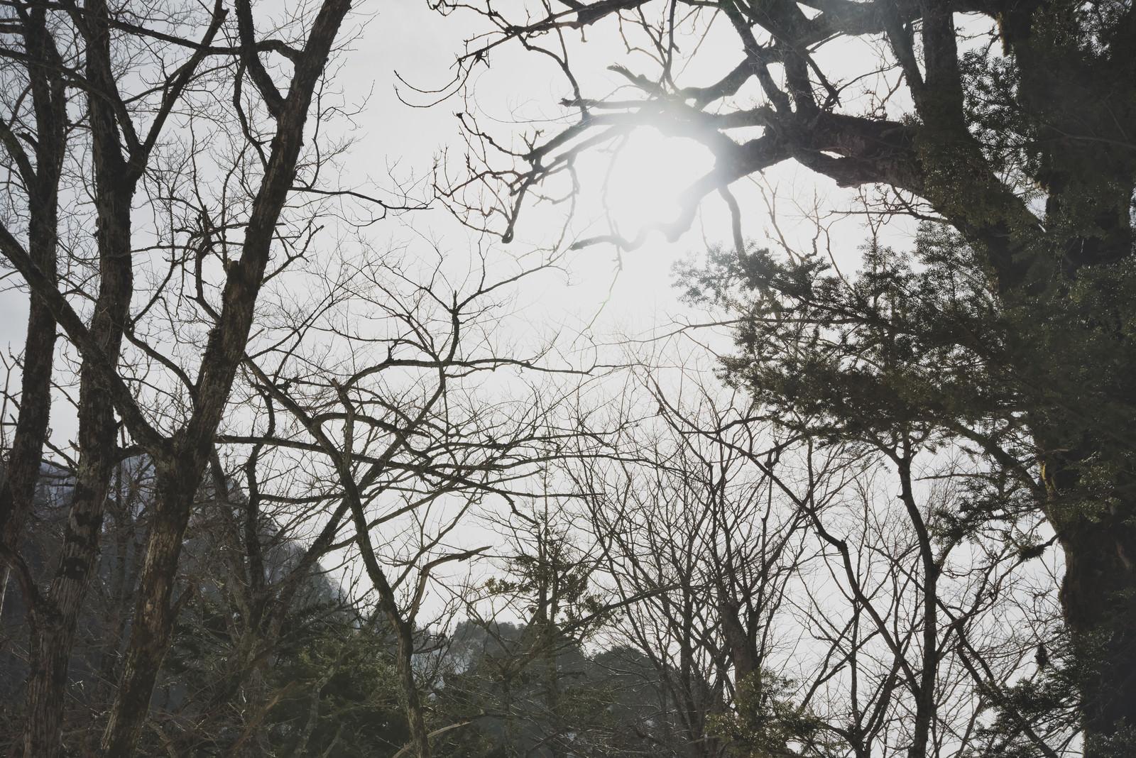 「立ち枯れの森に差し込む光」の写真
