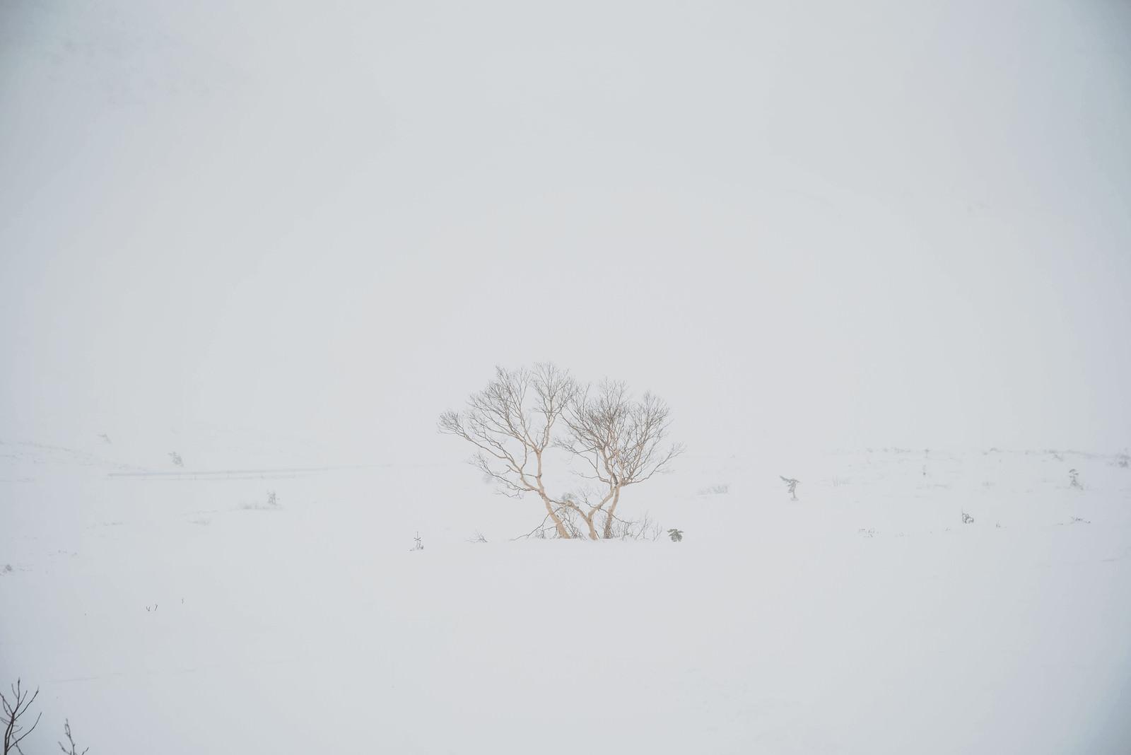 「視界不良の冬山で目印になる木」の写真