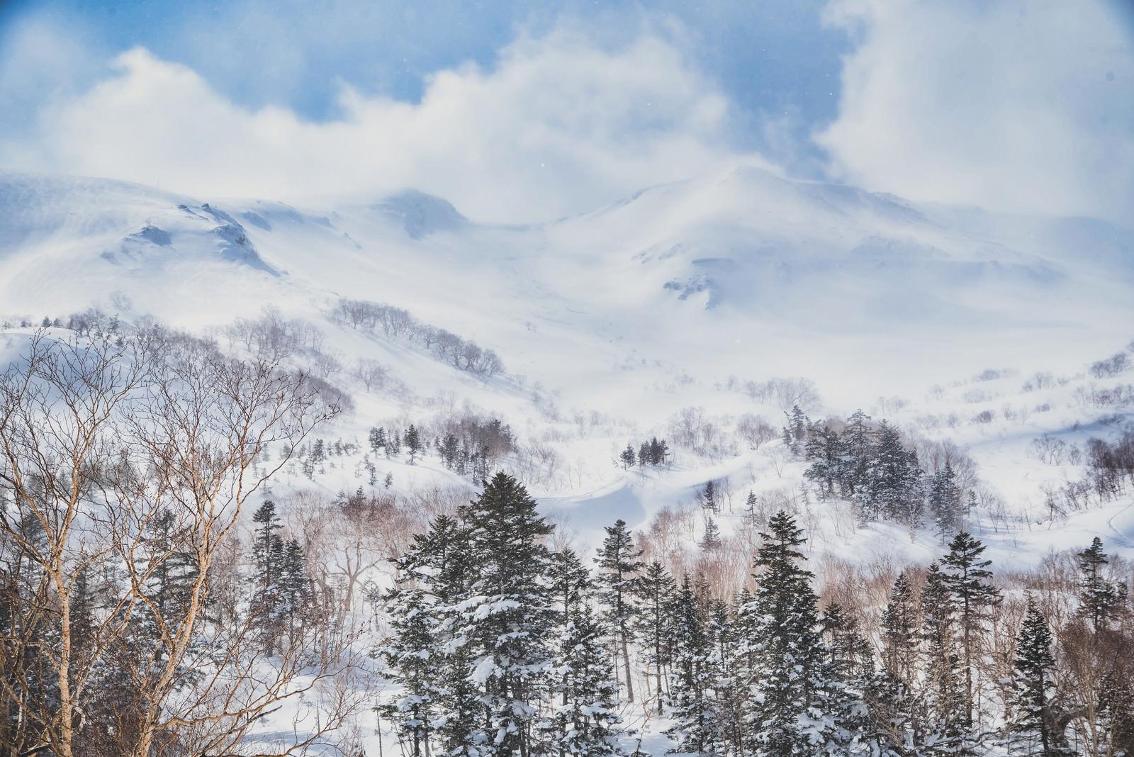 「幻想的な冬の乗鞍高原(北アルプス)」の写真
