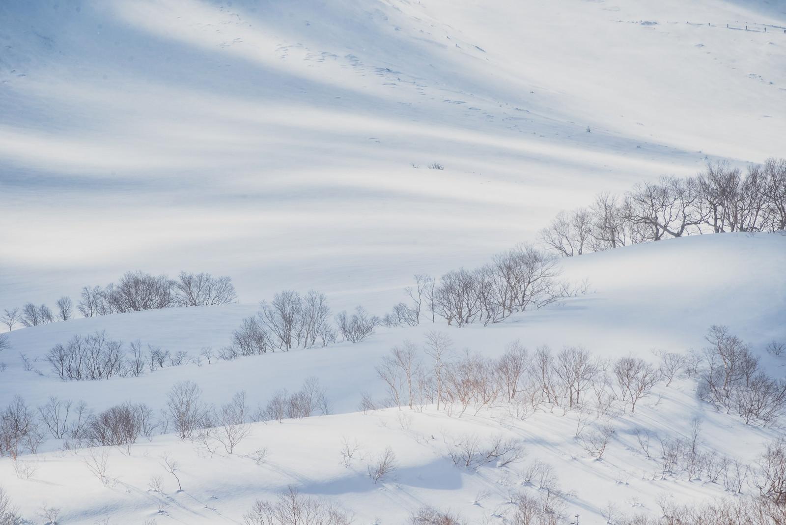 「波打つ雪の表面に走る光」の写真