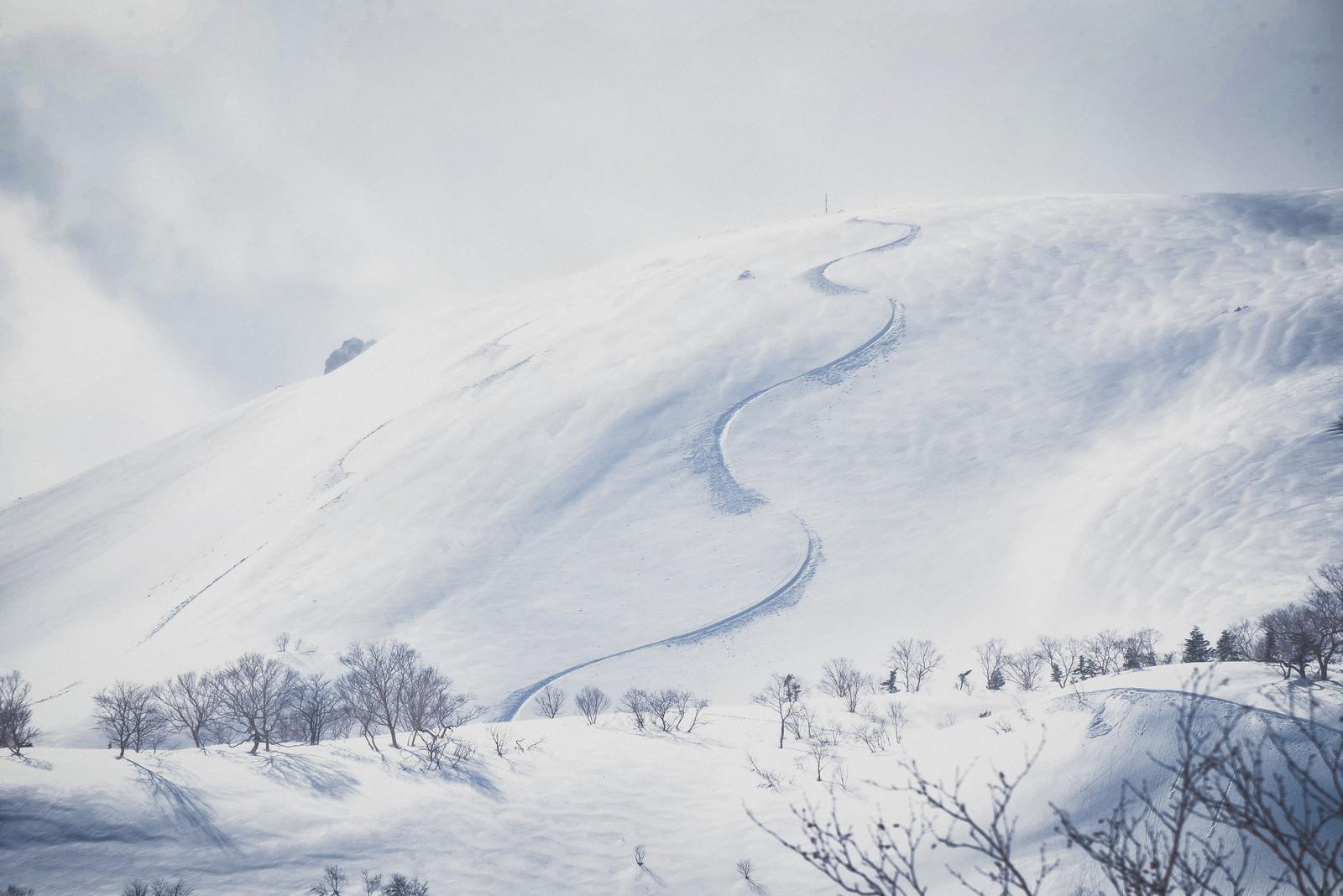 「雪原の斜面に残るシュプール」の写真