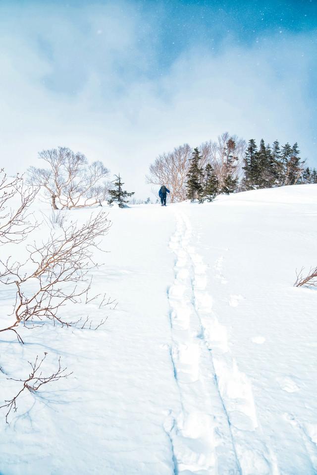乗鞍高原を登るスノーシュー跡(飛騨山脈)の写真