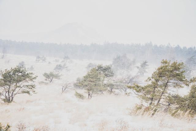 吹雪の中の車山高原の写真
