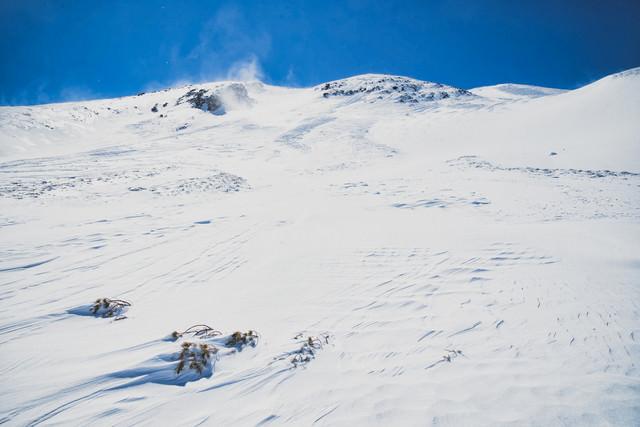 雪に埋まったハイマツと風紋の写真