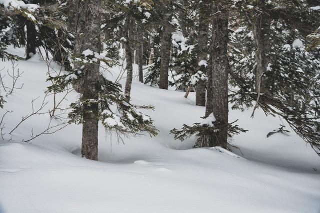 雪に埋もれた木々の写真