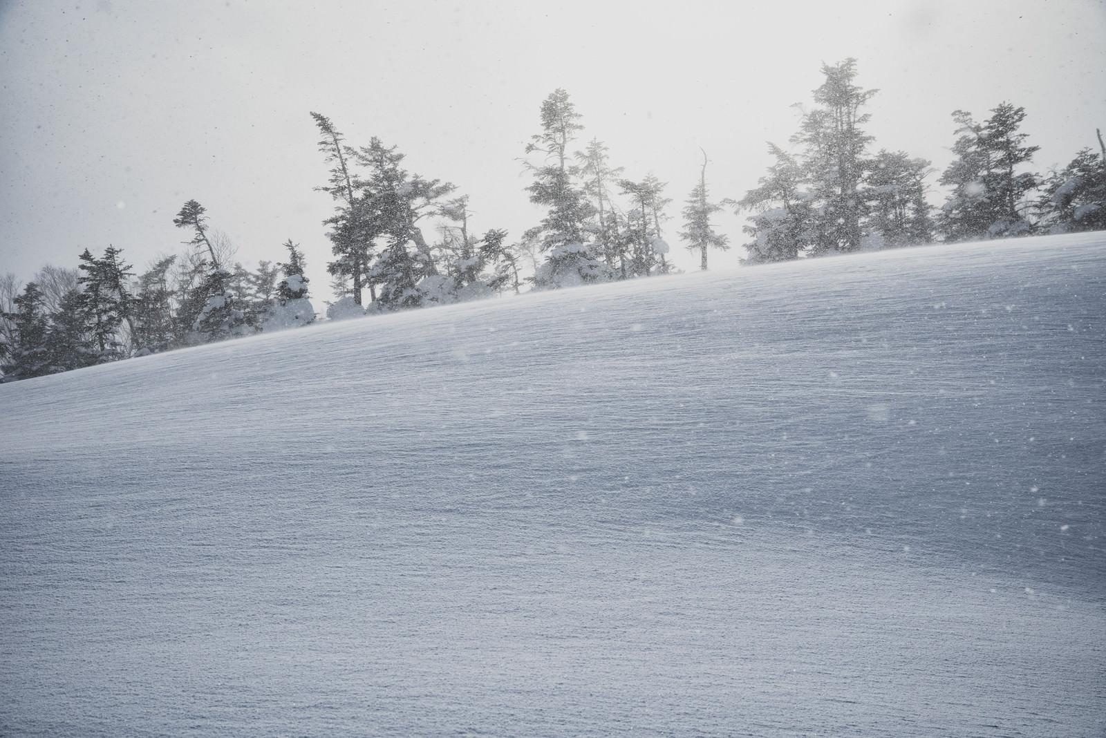 「雪原の世界」の写真