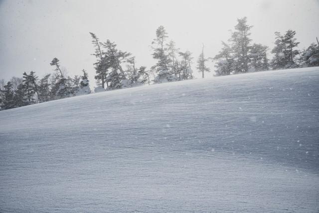 雪原の世界の写真