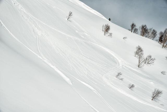 雪面に残るシュプールの跡の写真