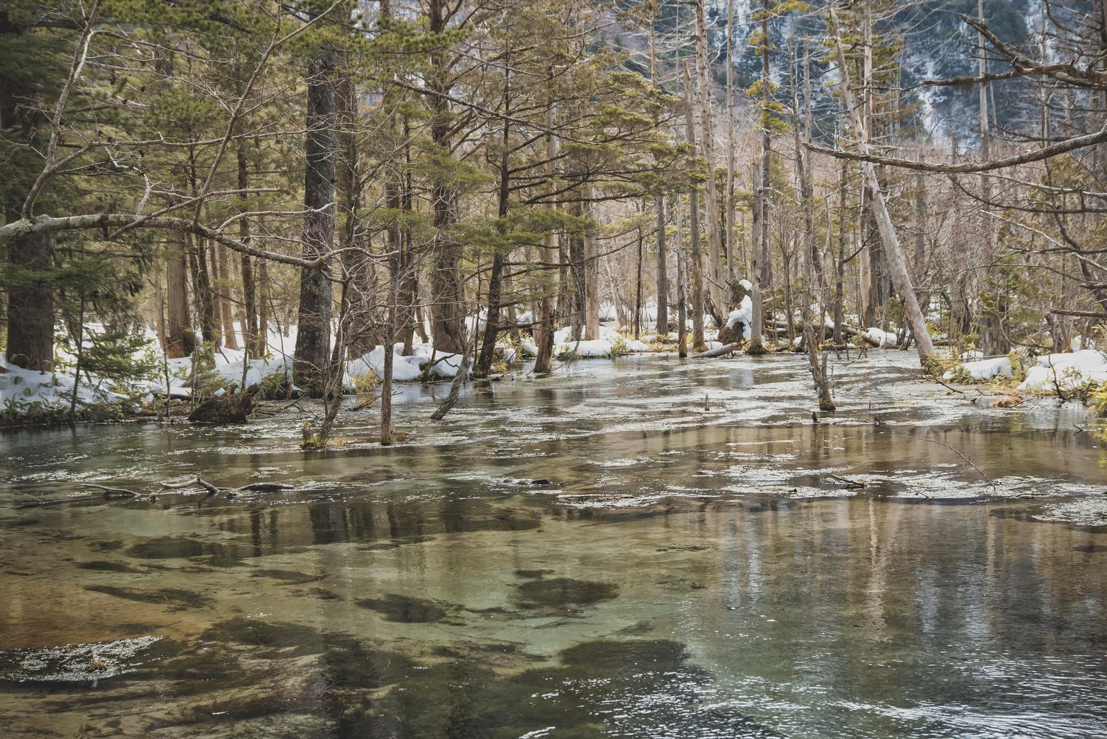 「冬の岳沢湿原(上高地)」の写真