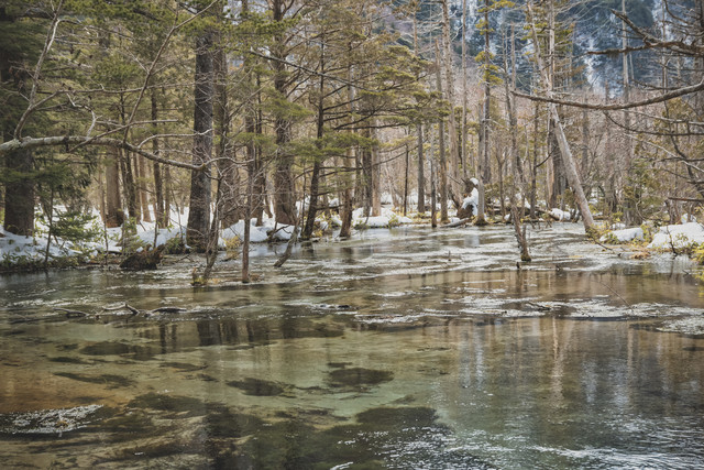 冬の岳沢湿原(上高地)の写真