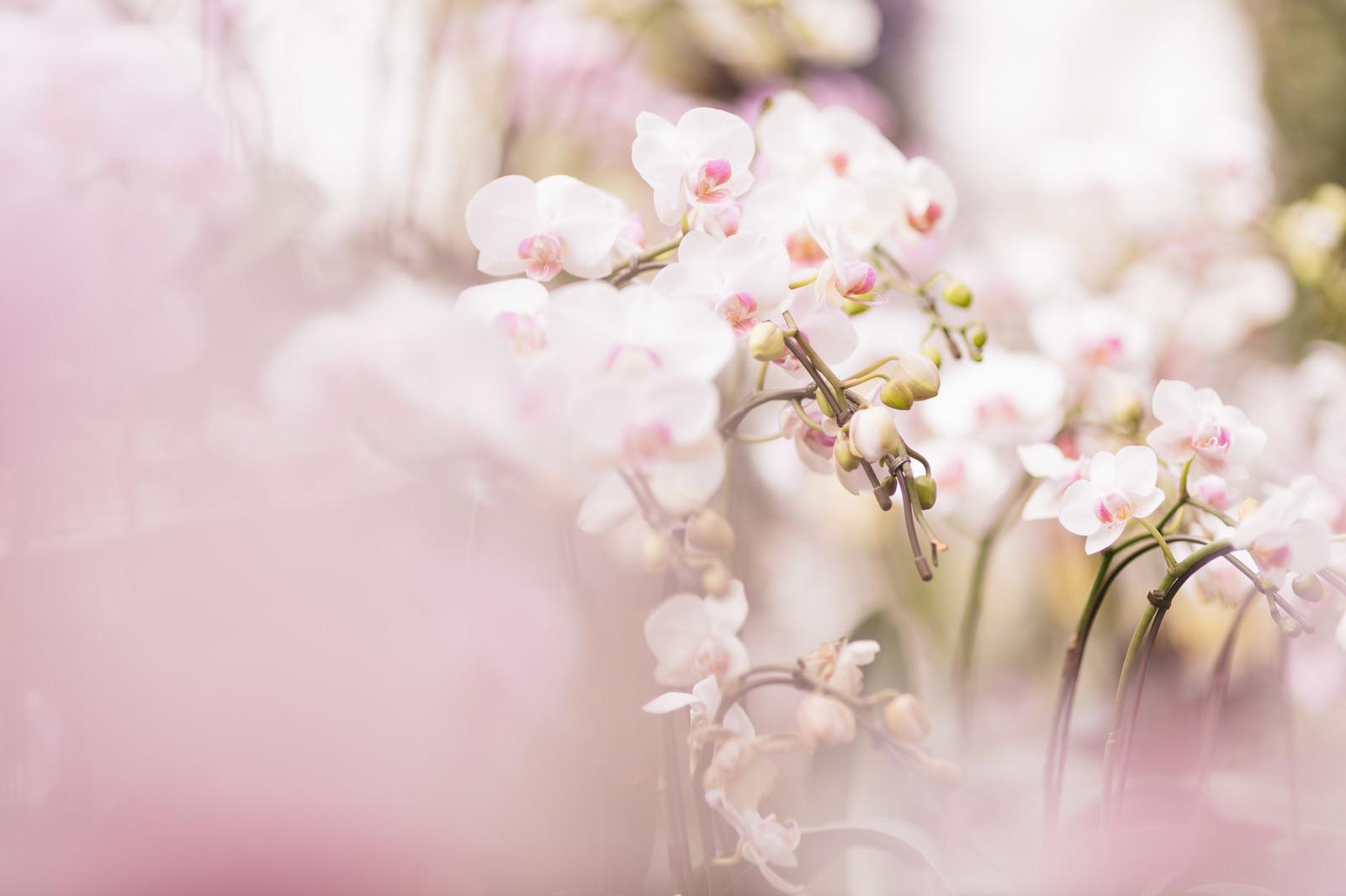 赏樱花是全日本国民的一大活动你也不要错过