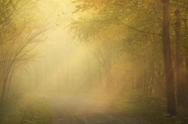 朝靄に包まれての写真