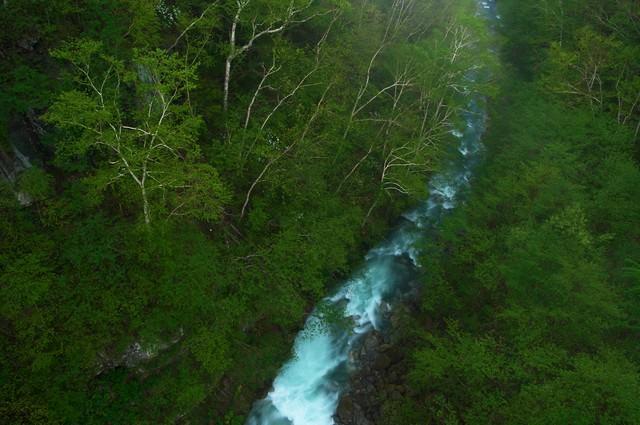 森を流れる渓流の写真