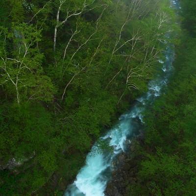「森を流れる渓流」の写真素材