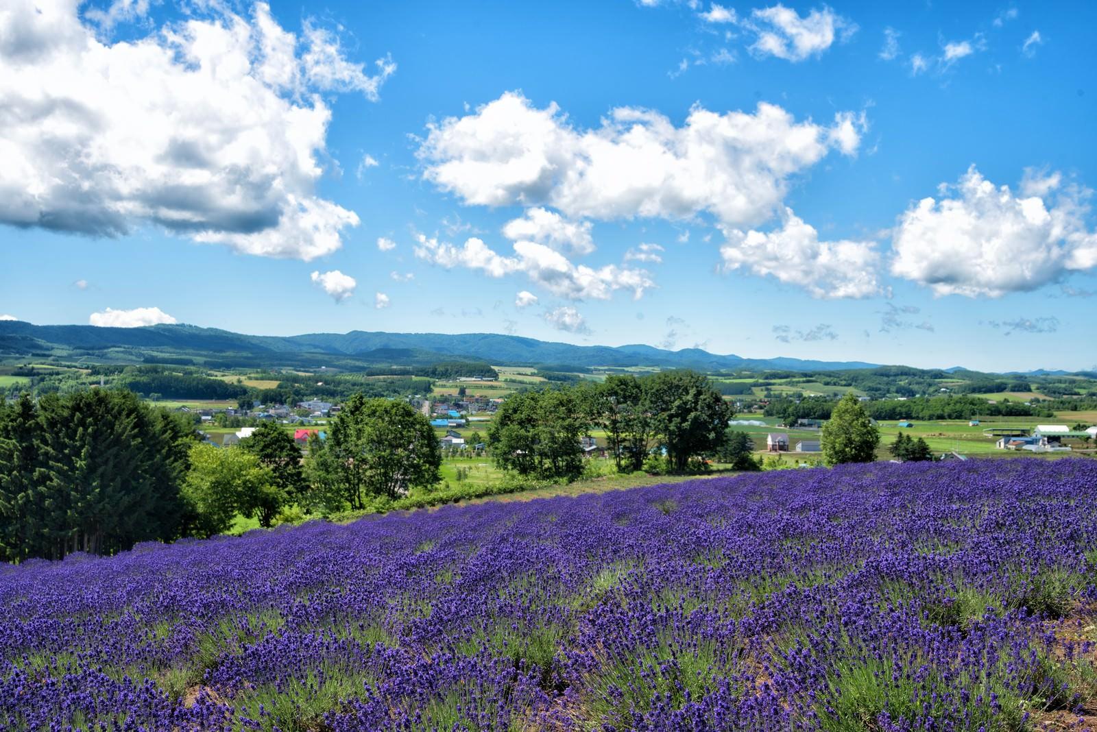 「ラベンダー畑から望む大自然に包まれた町」の写真