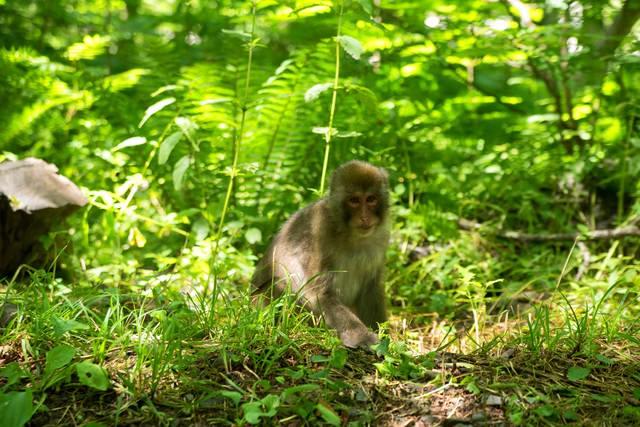 森に迷い込む子猿の写真