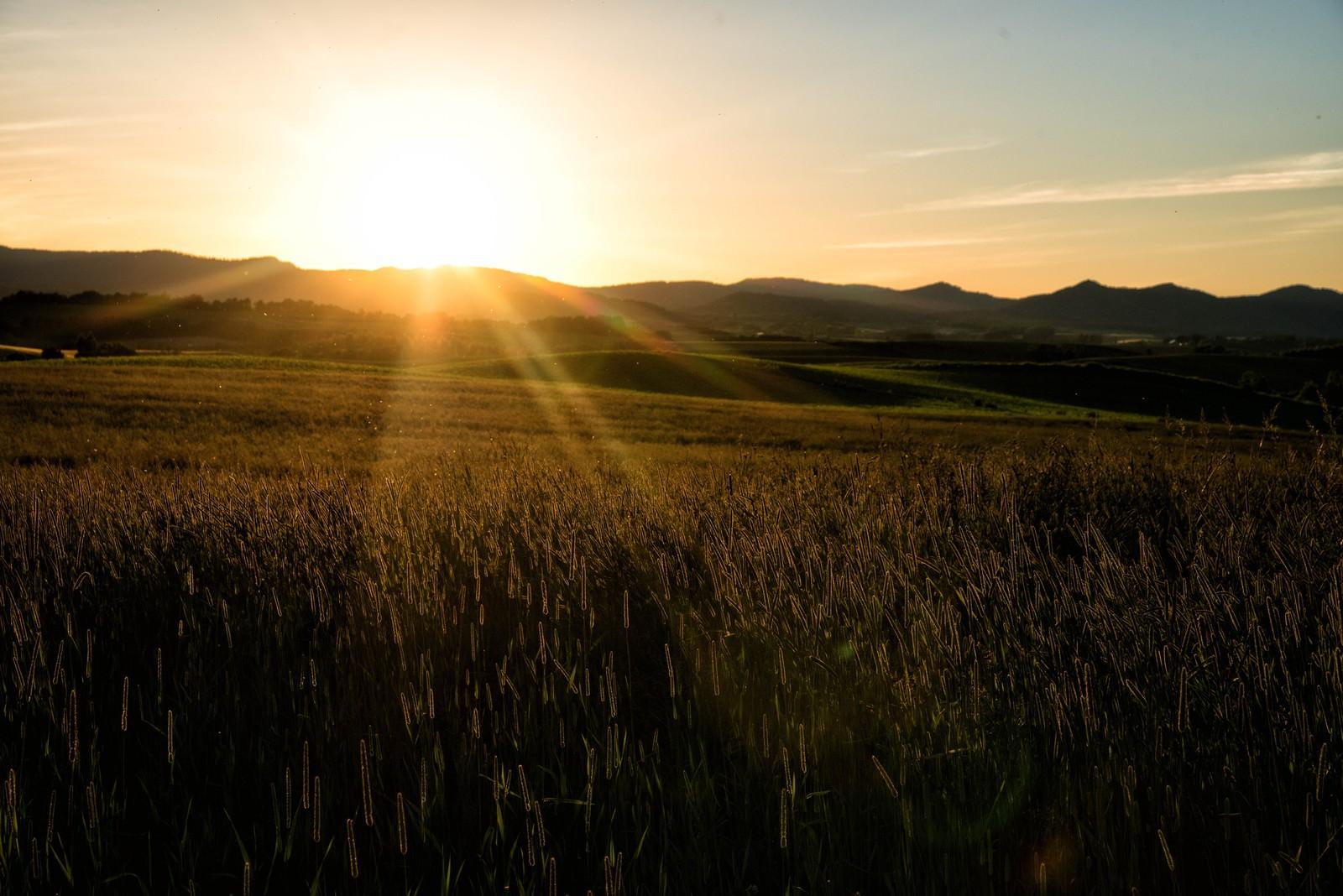 「夕日に染まるススキ」の写真
