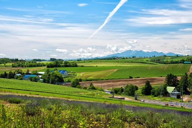 高台から見渡す畑のある風景(北海道)の写真