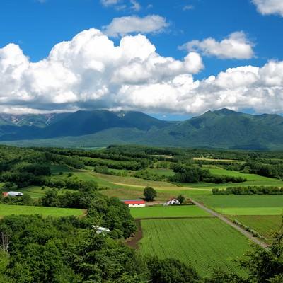 十勝岳に広がる積雲の写真