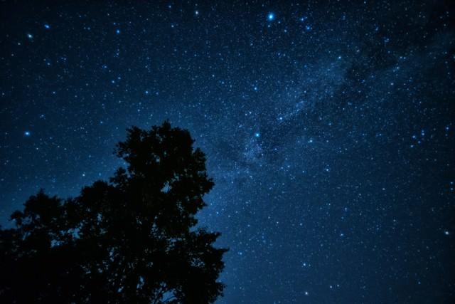 星空に映る大木のシルエットの写真
