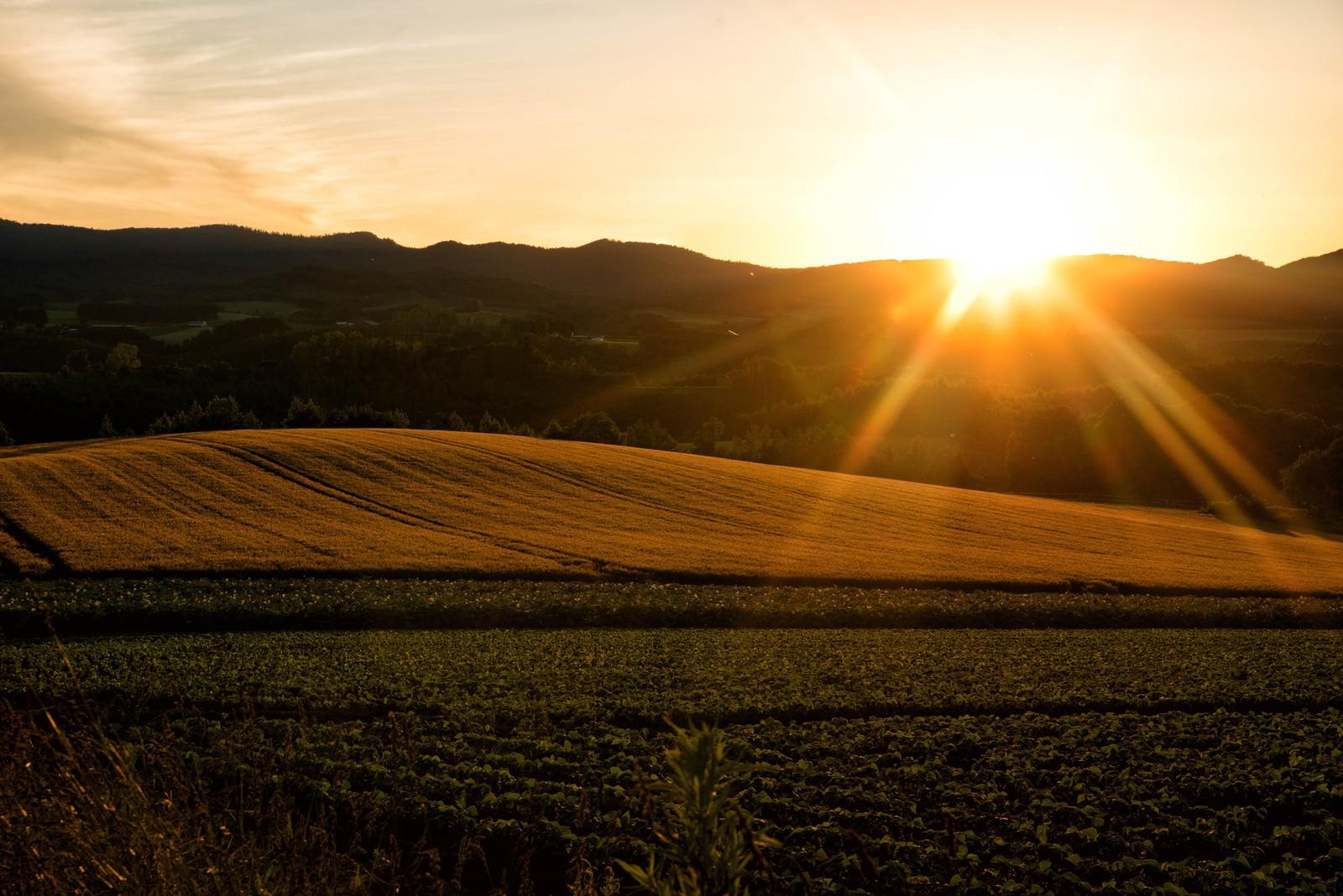 「富良野の畑から見える夕日」の写真