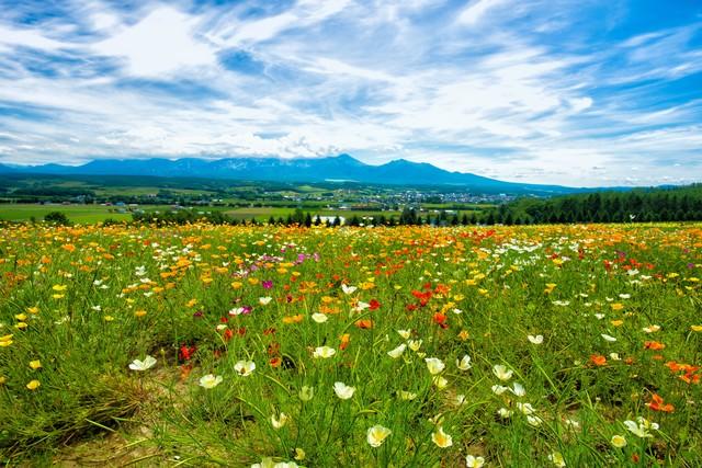 富良野の高台にある花畑から望む景色の写真