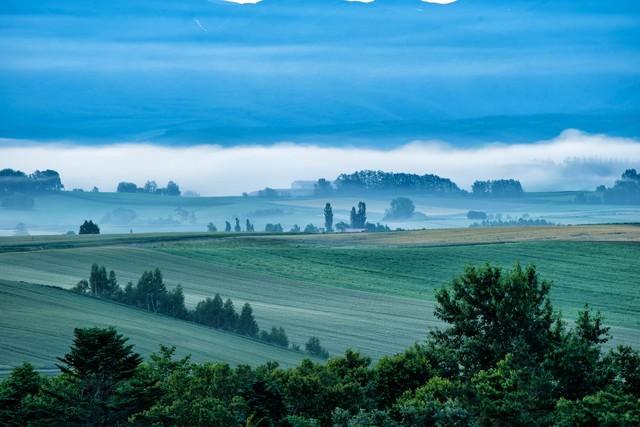 朝霧に包まれる美瑛町の丘の写真