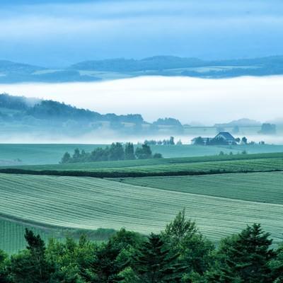 朝霧から顔を出す美瑛町の広大な畑の写真