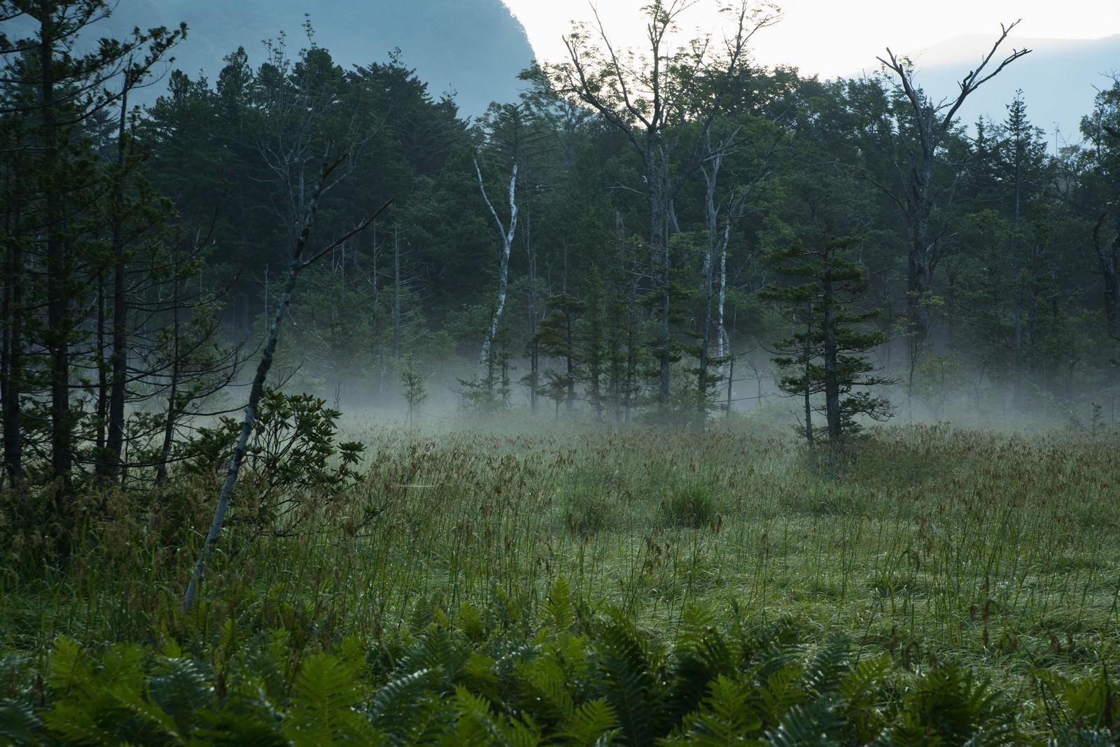 「朝靄に包まれる岳沢湿原」の写真