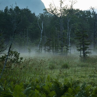 朝靄に包まれる岳沢湿原の写真