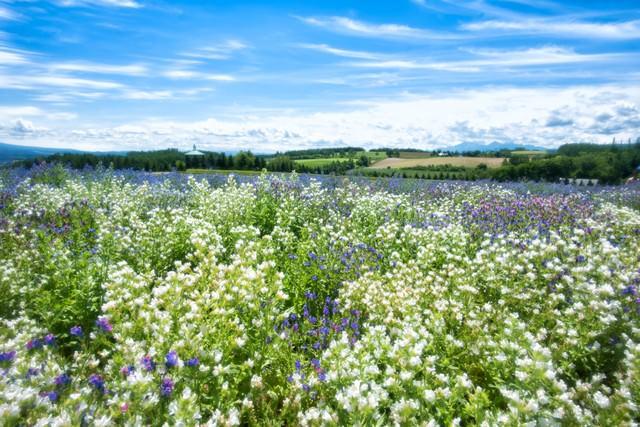 色とりどりの花畑の写真