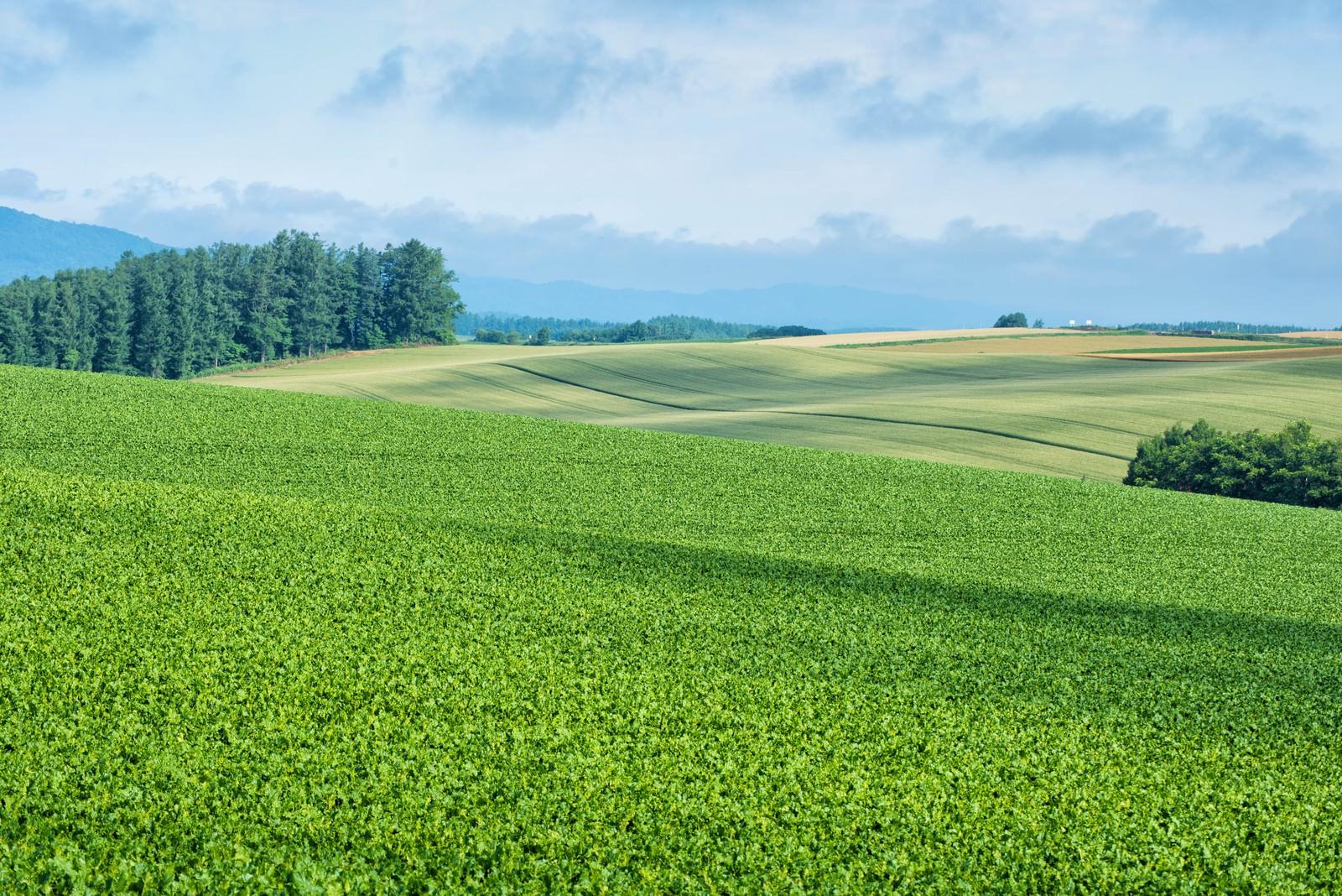 「雲の陰が映る広大な美瑛町の丘」の写真