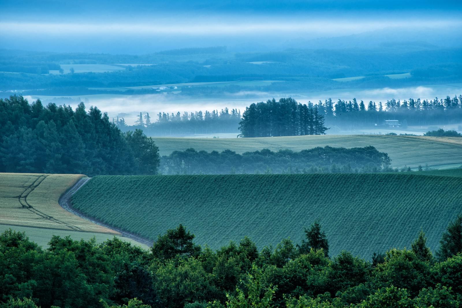 「朝霧が沸き立つ美瑛町の畑」の写真