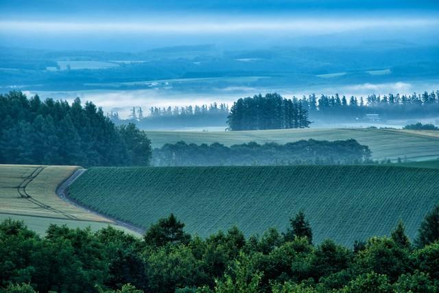 朝霧が沸き立つ美瑛町の畑の写真