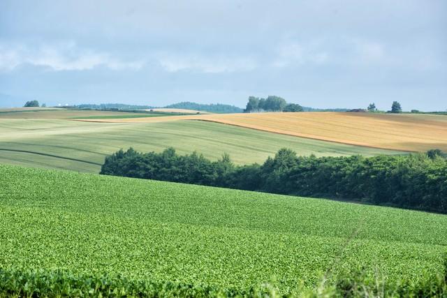 美瑛町の広大な畑の写真