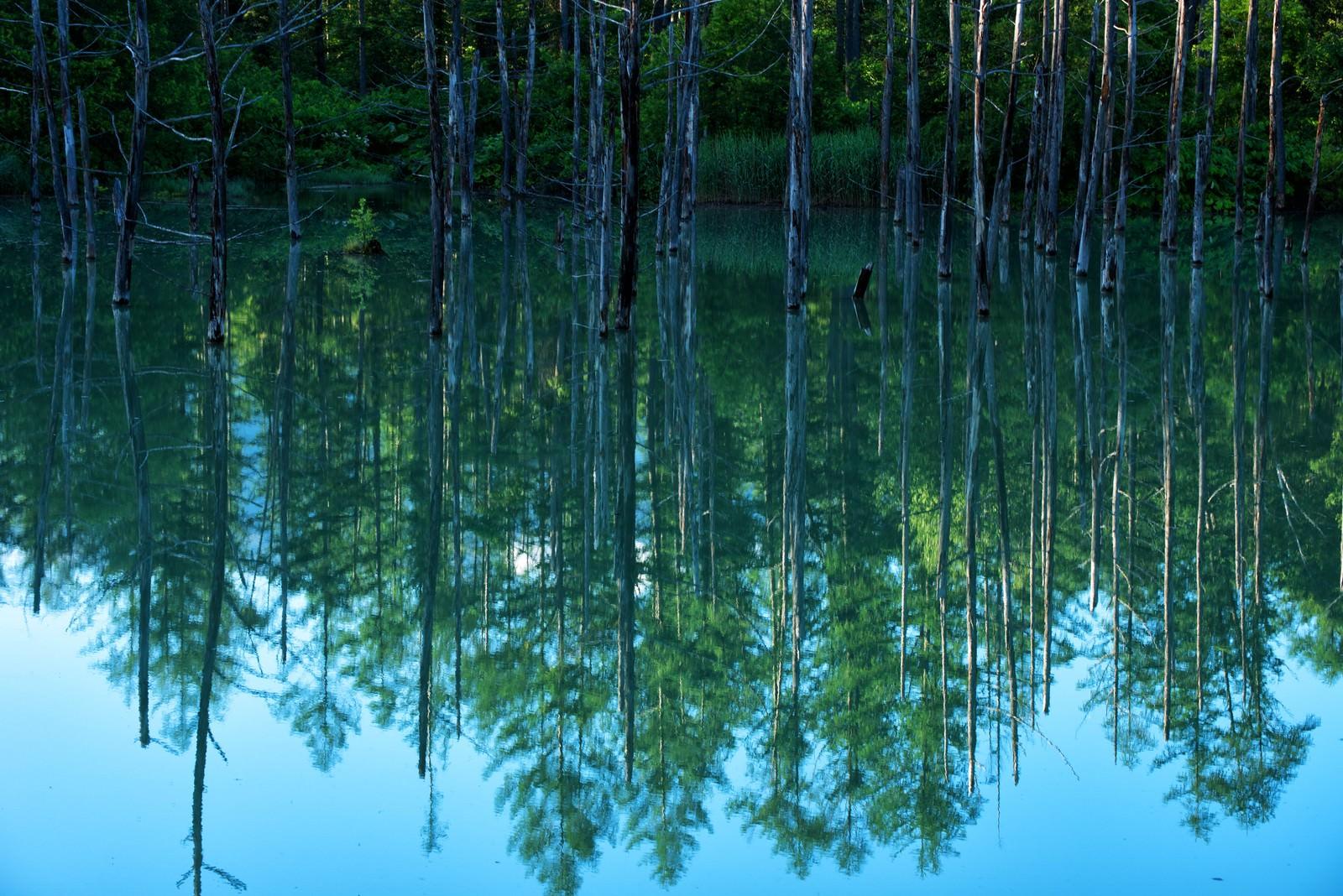 「青池の湖面に映る水鏡」