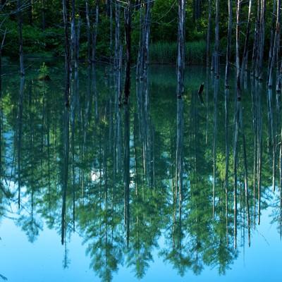 青池の湖面に映る水鏡の写真