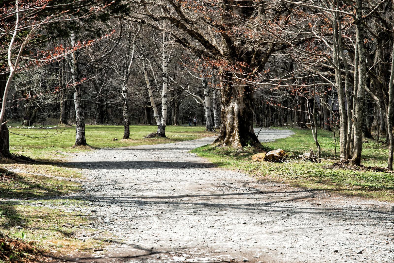 「穏やかな徳沢の林道(上高地)」の写真