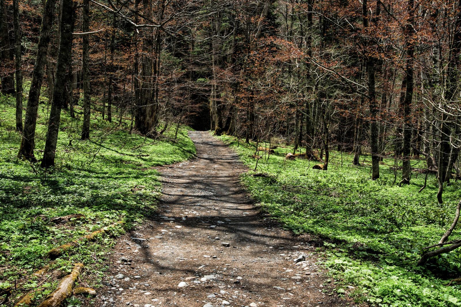 「春の上高地へ続く道」の写真