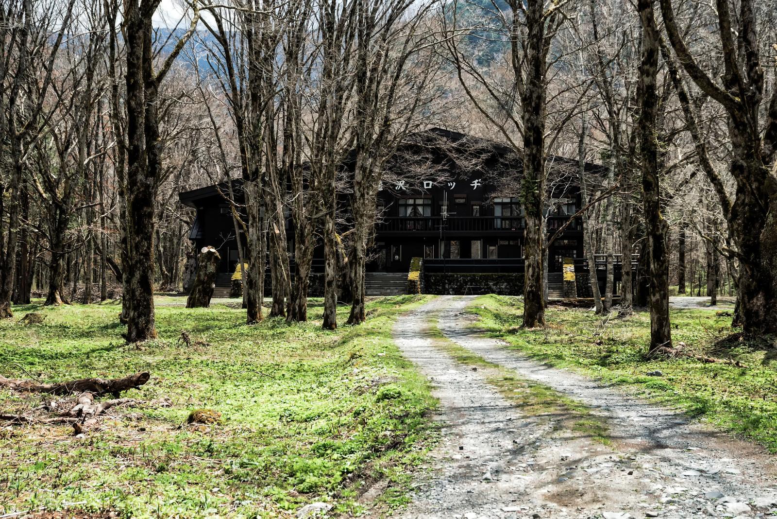 「森の中に佇む徳沢ロッジへ続く道」の写真