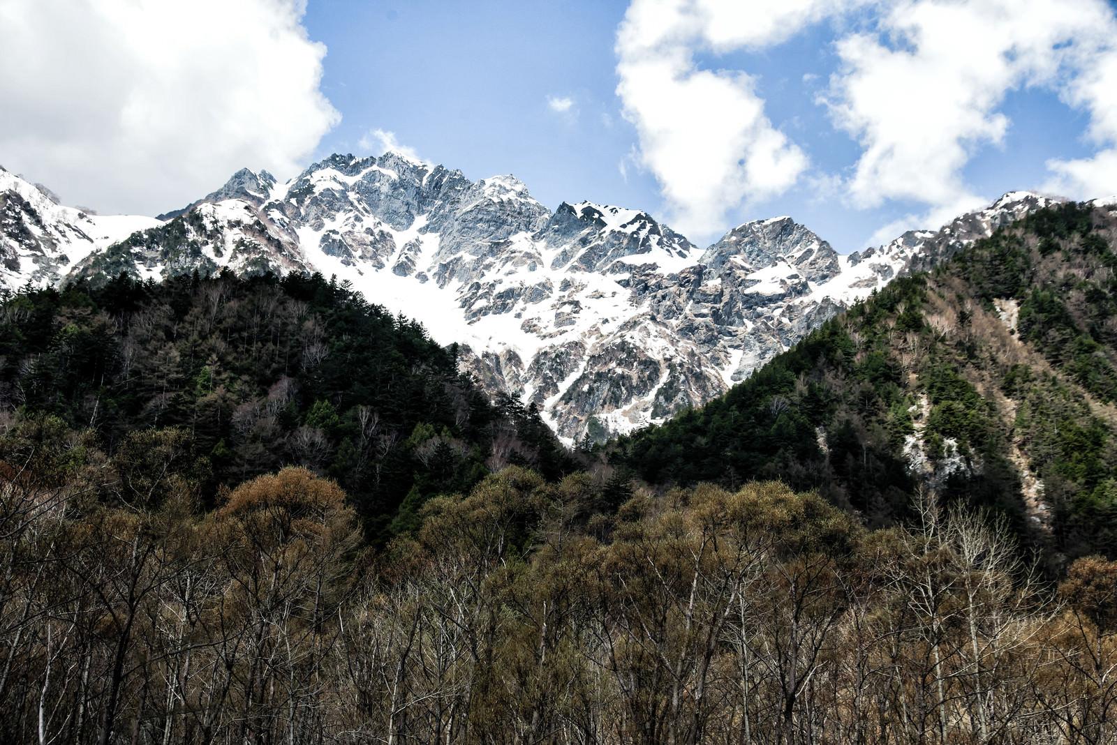 「森から眺める残雪の明神岳」の写真