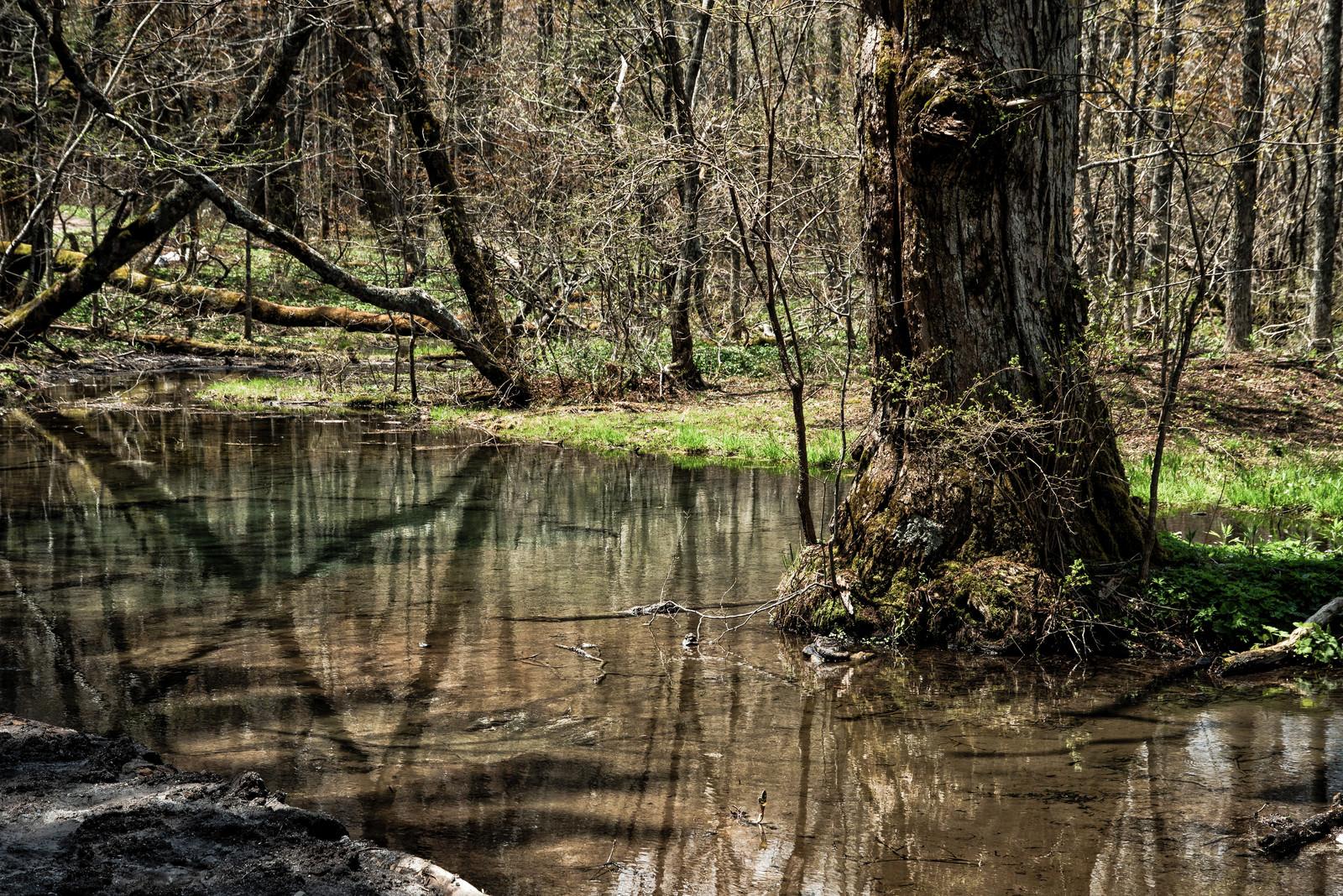 「明神池の水面に反射した森の木々(上高地)」の写真