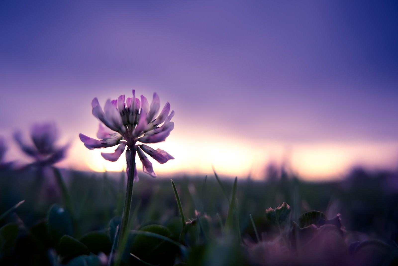 「夕暮れと花」の写真